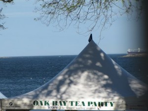 Oak Bay Tea Party Tent